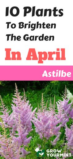 Ten Plants To Brighten The Garden In April And Have Fun While Growing Them! #garden#gardening#growyourmint.com