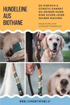 Family Dogs, Dog Bandana, Dog Accessories, Dog Leash, Beautiful Cats, Dog Mom, Beautiful Creatures, Dog Training, Puppies