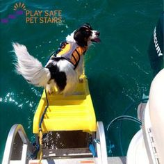 Dog Boat Ladder � Pawz Aboard Doggy Boat Ladder � Play Safe Pet Stairs