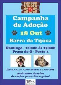 BONDE DA BARDOT: RJ: Adoção de cães e gatos na Barra da Tijuca, neste domingo (18/10)