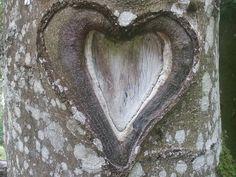 Coeur, Arbre, Amour, Nature, Romance, Saint Valentin