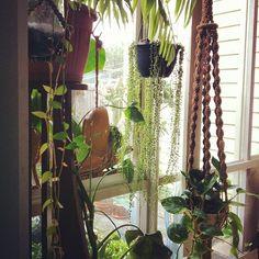 hanging plants in front of window in Den