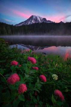 Spirea blooms along the banks of Reflection Lakes in Mt. Rainier National Park during a beautiful foggy sunrise [OC] [1333x2000] - steveschwindt - #nature #travel #landscape