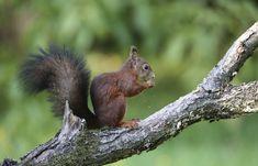 Squirrels, Thor, Kangaroo, Eat, Friends, Animals, White Photography, Monochrome, Chipmunks