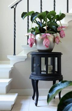 design-plantes-interieur-decoration-08