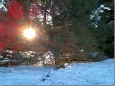 #photography #maine #canon #rebel #sun #trees