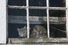 Andrew Wyeth, Cat in a Window Andrew Wyeth Paintings, Andrew Wyeth Art, Jamie Wyeth, Bunny Painting, Watercolor Paintings, Watercolour, Sea Paintings, Watercolor Portraits, American Artists