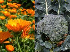 Bingo, Gardens, Vegetables, Wood Gardens, Garden, Outdoor Gardens, Vegetable Recipes, House Gardens, Veggies