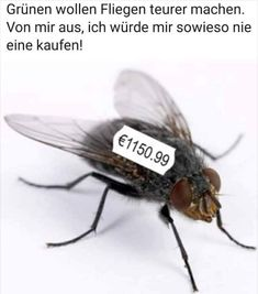 Greens want to make flies more expensive . Greens want to make flies more expensive . - Greens want to make flies more expensive . Greens want to make flies more expensive . This image - Funny Animal Videos, Animal Memes, Epic Fail Pictures, Garden Quotes, Cartoon Gifs, Self Motivation, Makeup Quotes, Fitness Quotes, Funny Fails