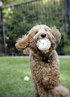 Sam with his face full of ball. Again.