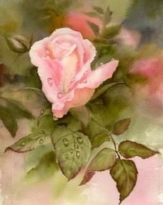 Susie Short Watercolors - Floral Paintings of Roses