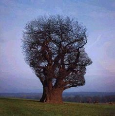 A tree with the shape of a face