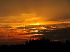 Golden sunset against silhouetted trees in Stayton Oregon