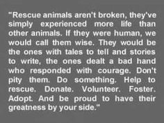 "Please adopt, if you can't adopt - foster, if you can't foster - sponsor, if you can't sponsor - volunteer, if you can't volunteer - network. If you can't network, please re-evaluate your priorities in life, and ask yourself, ""Is there nothing I can do to help save innocent lives?"" Just forwarding a post of an animal in need is all it takes to be a part of something much bigger! Networking saves lives! Save a life today! It may just be one of the most rewarding things you'll ever do!"