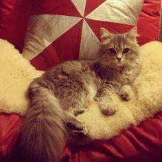 sooooo cute♡♡♡  フワフワしっぽの猫姫様