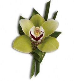 Green Orchid Boutonniere in AuroraIL, Joy Florist--For the groom