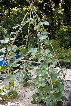 Vege Garden Ideas, Vegetable Garden Design, Easy Garden, Potager Bio, Potager Garden, Garden Trellis, Garden Bulbs, Garden Plants, Garden Cultivator