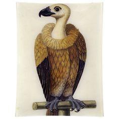 John Derian Company Inc — - Vulture New York Studio, Studio City, Bird People, Birds 2, Vulture, Book Images, Hand Blown Glass, Vintage Prints