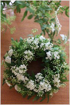 Spirea - 'Bridal Veil' Wreath