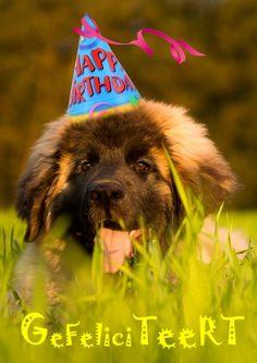 Leonberger hond met feestmuts verjaardagskaart (@Karen van Gerner Fotografie)