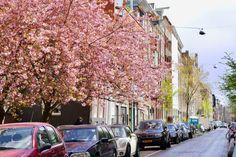 Why I love springtime in Amsterdam