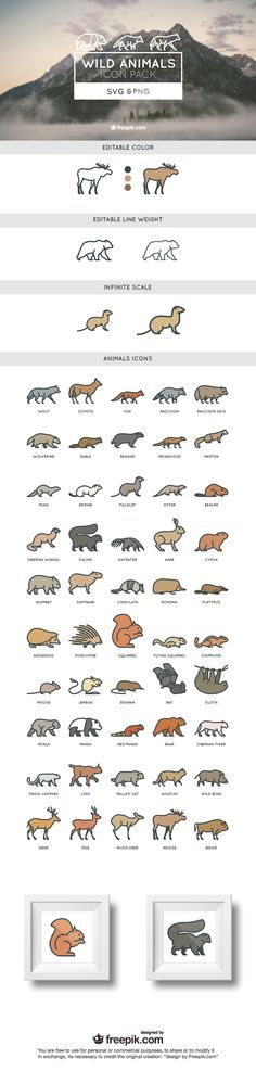 50 wild free animals SVG and PNG icon set | Creative Nerds