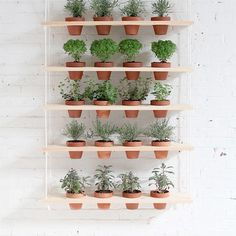 Planter Banter. 9 Reasons Why Living with Plants is Kind of the Best. | Paper & Stitch | Bloglovin'