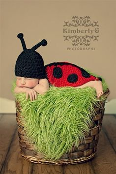 Cute little lady bug