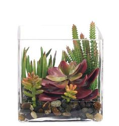 Natural Decorations, Inc. - Succulent |Rockbed | Glass Cube via ndi.com