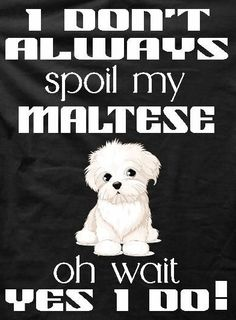 Maltese Poodle, Maltese Dogs, Rottweiler, Flower Pot Art, Dog Jokes, Mini Dogs, Maltipoo, Doberman, Fur Babies