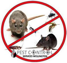 How You Can Control Hummingbird Feeder Pests Such as Ants, Bees and Wasps Best Pest Control, Pest Control Services, Bug Control, Types Of Bugs, Types Of Insects, House Insects, Natural Pesticides, Bees And Wasps, Pest Management