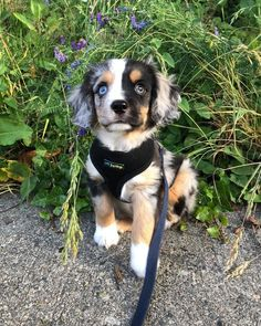 Dog Breeds For Kids 40 Cute Animal Pictures To Make Your Day Better.Dog Breeds For Kids 40 Cute Animal Pictures To Make Your Day Better Super Cute Puppies, Cute Little Puppies, Cute Dogs And Puppies, Cute Little Animals, Cute Funny Animals, Baby Dogs, Doggies, Cute Puppy Pics, Pet Dogs