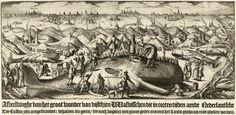 Nicolaes van Geelkercken (ca 1585 - 1656) Walvissen gestrand tussen 1519-1617 op de Nederlandse kust, 1617. Overzicht van de walvissen die tussen de jaren 1519-1617 gestrand zijn op de Nederlandse kust. Op de voorgrond ligt een grote potvis die beklommen en opgemeten wordt. Op het Noordzeestrand links en rechts van Wijk aan Zee tot Ter Heijde meerdere gestrande potvissen.  In de verte de steden Haarlem, Leiden en Den Haag.