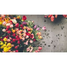 Already planning your bulk flowers order for this upcomming Valentine's? Tulips are one of the hottest trends, find out how to use them: http://www.wholeblossoms.com/wedding-flowers-blog/various-colors-of-wholesale-tulips-flowers-for-this-valentine-season/  #DIY