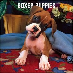 Boxer puppies are my favorite :)