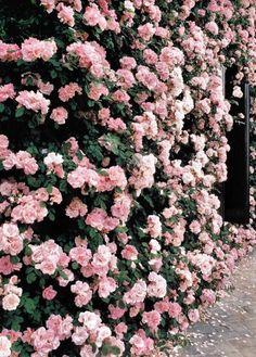 Flower Arrangements Inspiration: Wall of pink flowers