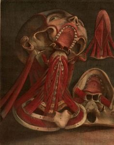 """Plates from """"Essai d'Anatomie"""" produced by Gautier D'Agoty in 1745 in Paris, France – a remarkably detailed atlas of the head, neck, and shoulder areas of the human body with explanatory text in French."""