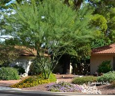 Water Saving Landscapes: 3 Options