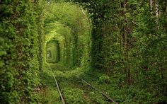 Fairy Tale Tunnel of Love Found in Klevan Ukraine 5