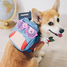 """""""My backpack's packed, I'm ready to go.  Rooooad trip!  Not sure where I'm headed, but bringing along a lei, a passport, and some stunna shades from…"""""""