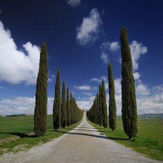 "500px / Photo ""Tuscan views"" by mauro maione"