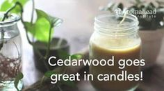 CEDAR OIL - YouTube Cedarwood Essential Oil, Essential Oils, Cedar Oil, Natural Remedies, Herbalism, The Cure, Herbs, Fruit