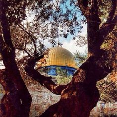 View from a tree Al-Quds