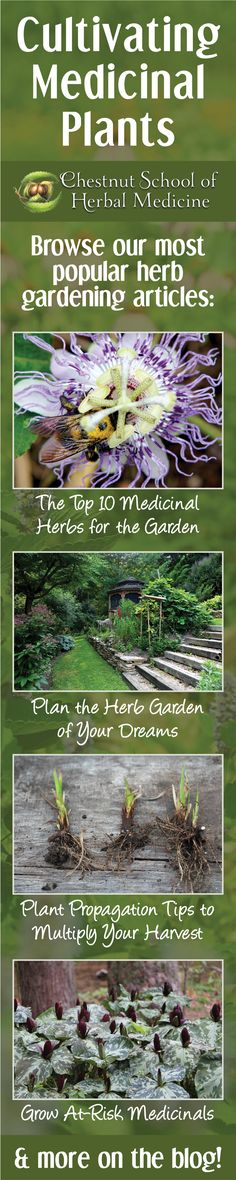 Browse our most popular Herb Gardening Articles!   #herbalife #herbgardening #DIYherbgarden #herbalist #herbalism #herbs