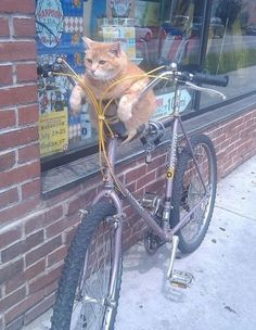 Top 10 Pictures of Cats on Bicycles