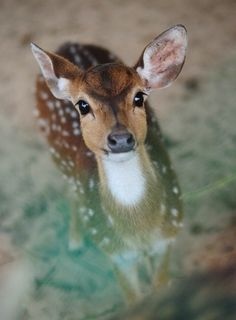 Oh hai, I'm a precious little deer. #cute #animals #deer #woodland