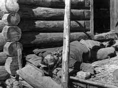 "Russian partisan lies dead after being tortured by the Germans. Standing orders stated that partisans, real or suspected, were to be summarily executed upon capture. Many German soldiers added torture as part of the ""fun. Ww2 History, Military History, Eastern Front Ww2, Battle Of Stalingrad, Central And Eastern Europe, Bad Picture, World War Two, In This World, Wwii"