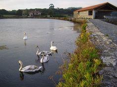 Marisma de Joyel  #Cantabria #Spain