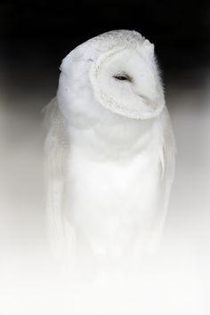Ghost by Sue Demetriou