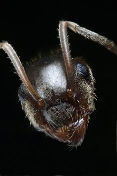 Portrait of an Ant